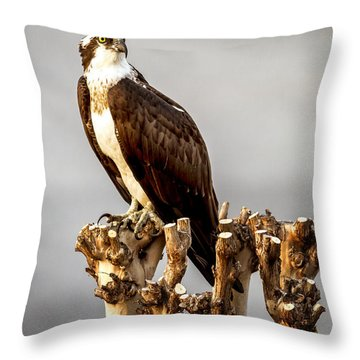 Stop And Pause Throw Pillow