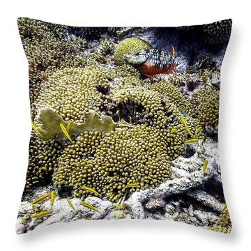 Throw Pillow featuring the photograph Stoplight Parrotfish And Yellow Chromis by Perla Copernik