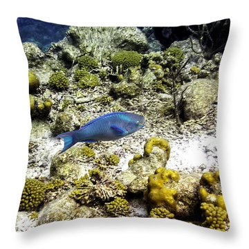 Throw Pillow featuring the photograph Stoplight Parrotfish  by Perla Copernik