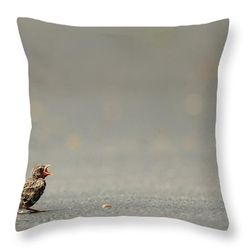 Story Of The Baby Chipping Sparrow 3 Of 10 Throw Pillow
