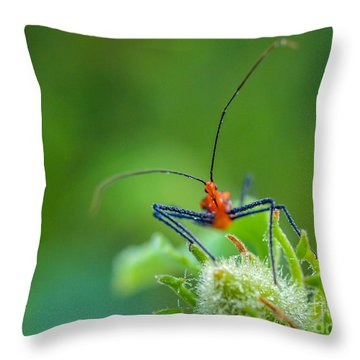 Straight In The Eye Look  Throw Pillow
