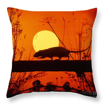 Stranglers Rattus Norvegicus Rat Throw Pillow