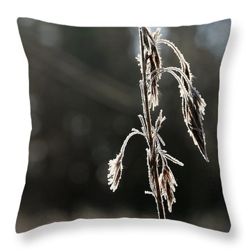 Straw In Backlight Throw Pillow