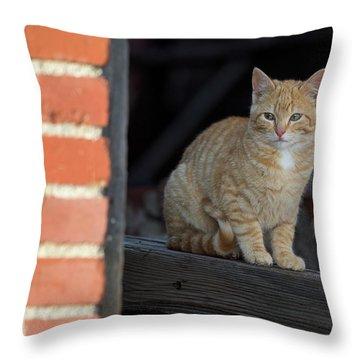 Street Cat Throw Pillow by Scott Warner