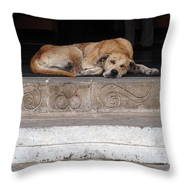 Throw Pillow featuring the photograph Street Dog Sleeping On Steps by Karen Zuk Rosenblatt