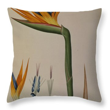 Strelitzia Reginae Throw Pillow by Pierre Joseph Redoute