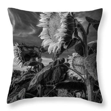 Strength Of A Sunflower Throw Pillow