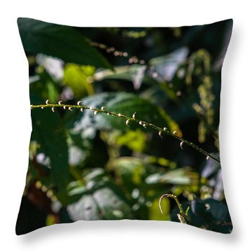 String Of Light Throw Pillow by Edward Peterson