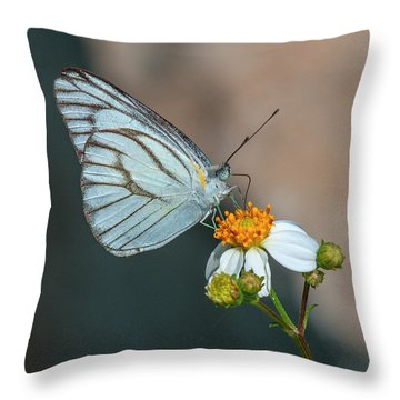 Striped Albatross Butterfly Dthn0209 Throw Pillow