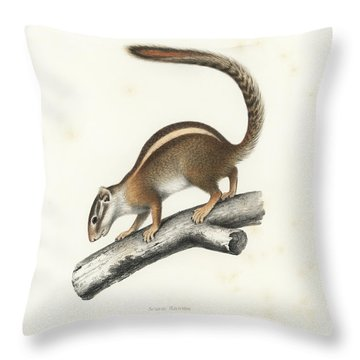 Throw Pillow featuring the drawing Striped Bush Squirrel, Paraxerus Flavovittis by J D L Franz Wagner