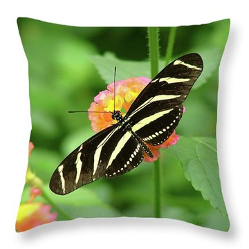 Throw Pillow featuring the photograph Striped Butterfly by Wendy McKennon