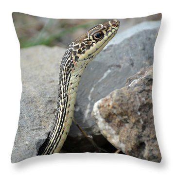 Striped Whipsnake, Masticophis Taeniatus Throw Pillow