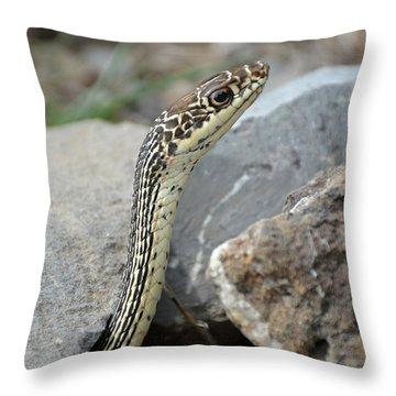 Striped Whipsnake, Masticophis Taeniatus Throw Pillow
