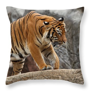 Stripes Throw Pillow by Jonas Wingfield