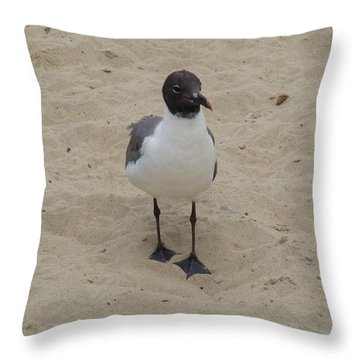 Throw Pillow featuring the photograph Struttin' Seagull  by Charles Kraus