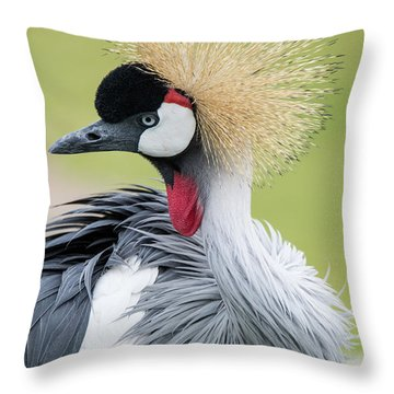 Strutting My Stuff Throw Pillow