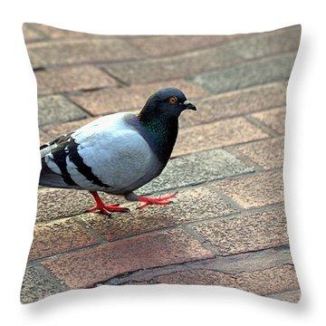 Strutting Pigeon Throw Pillow