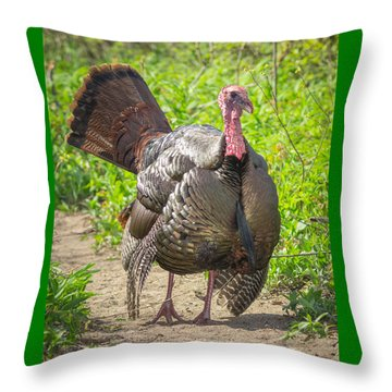 Strutting Tom Turkey Throw Pillow