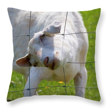 Stuck Throw Pillow by Mike  Dawson