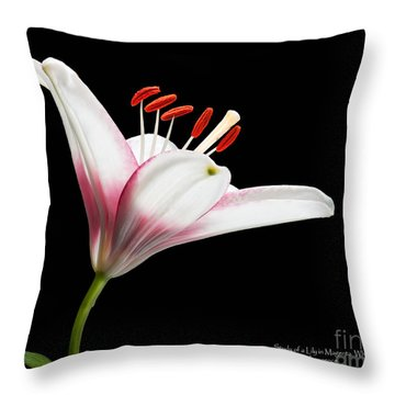 Study Of A Lily In Magenta, White, And Red #2 By Flower Photographer David Perry Lawrence Throw Pillow by David Perry Lawrence