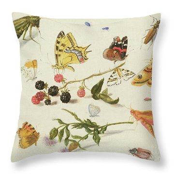 Study Of Insects, Flowers And Fruits, 17th Century Throw Pillow