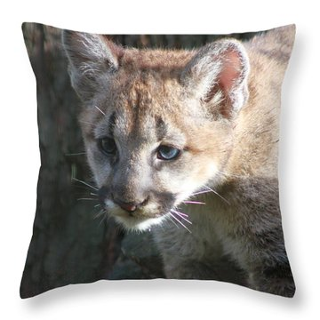 Throw Pillow featuring the photograph Studying The Ways by Laddie Halupa
