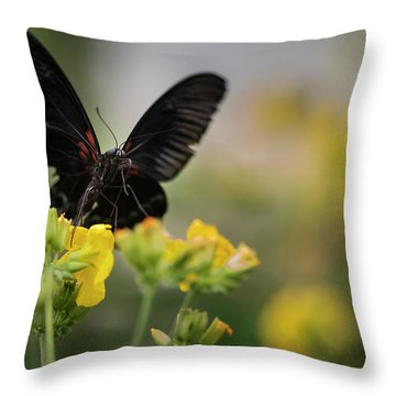 Stunning Scarlet Swallowtail Butterfly On Bright Yellow Flower W Throw Pillow