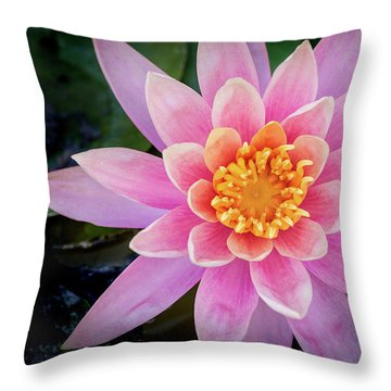 Stunning Water Lily Throw Pillow