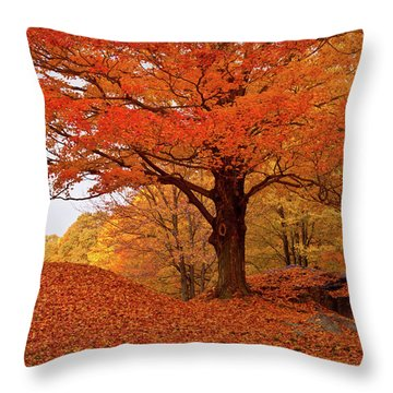 Sturdy Maple In Autumn Orange Throw Pillow