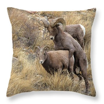 Committed To The Cause Throw Pillow