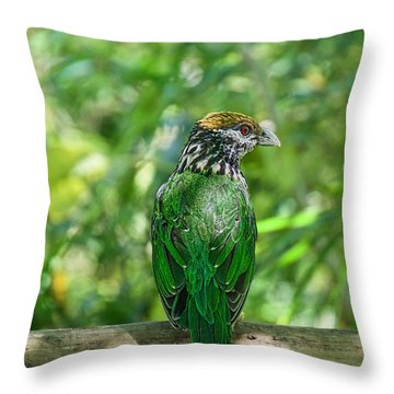 Subtropical Forest Dweller Throw Pillow