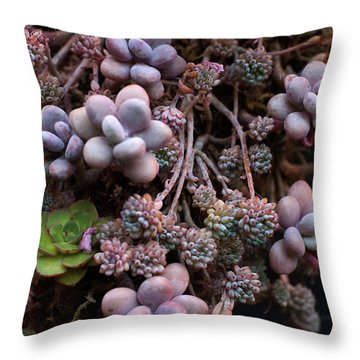 Succculents  Throw Pillow by Catherine Lau