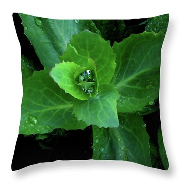 Succulent After The Rain  Throw Pillow