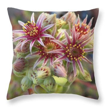 Succulent Cactus Throw Pillow by Laurie Kidd