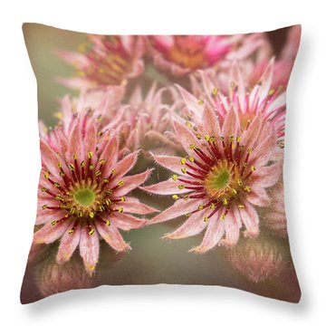 Succulent Flowers - 365-100 Throw Pillow by Inge Riis McDonald