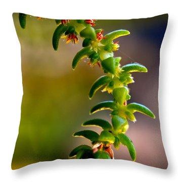 Succulent Hanging Throw Pillow