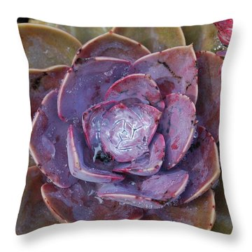 Succulent Star Throw Pillow
