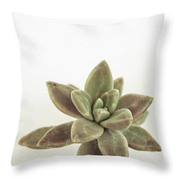 Succulents Flowers Colour Throw Pillow