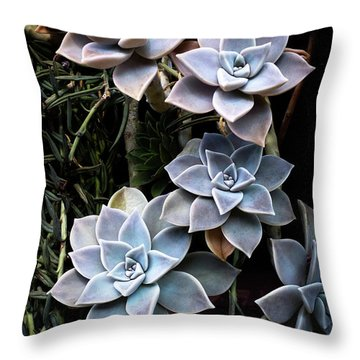 Succulents Graptopetalum Paraguayense     Throw Pillow by Catherine Lau