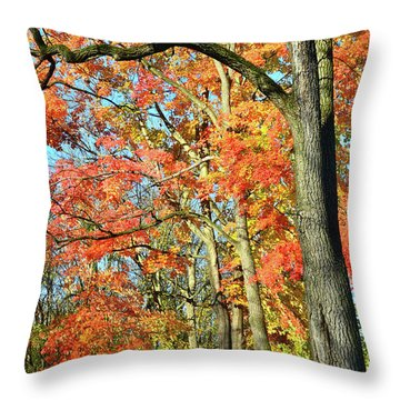 Throw Pillow featuring the photograph Sugar Maple Stand by Ray Mathis