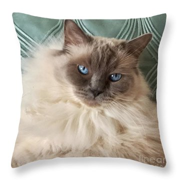 Sugar My Ragdoll Cat Throw Pillow