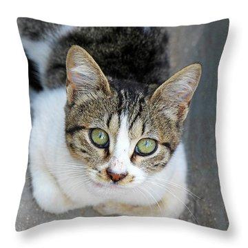 Throw Pillow featuring the photograph Suma by Munir Alawi