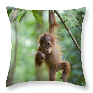 Sumatran Orangutan Pongo Abelii One Throw Pillow by Suzi Eszterhas