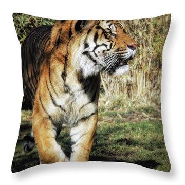 Sumatran Tiger  Throw Pillow