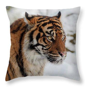 Sumatran Tiger In The Snow Throw Pillow