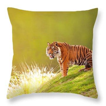 Sumatran Tiger On Hillside In Morning Light Throw Pillow