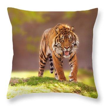 Sumatran Tiger Walking Forward Throw Pillow