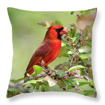 Summer Cardinal Throw Pillow