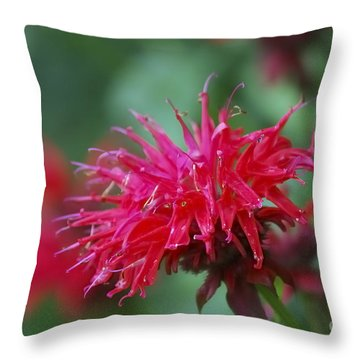 Summer Color Throw Pillow