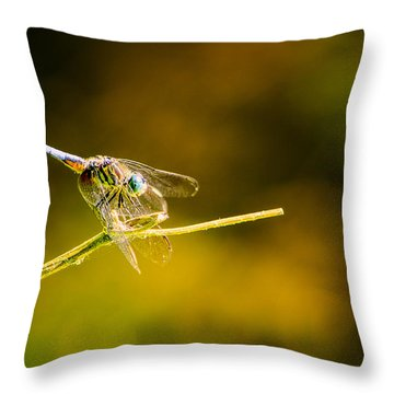 Summer Days Throw Pillow by Craig Szymanski